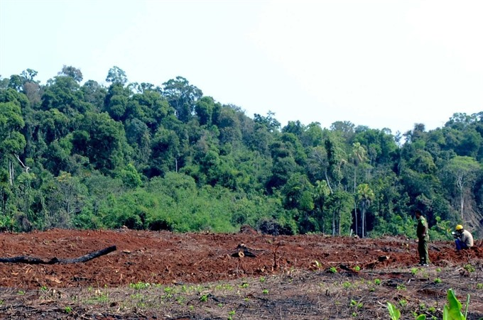 Community-based forest management the way forward