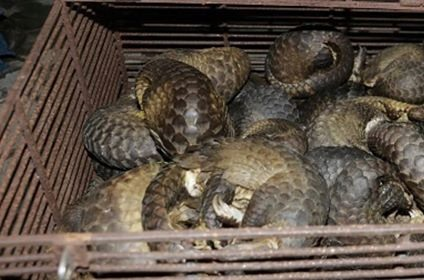 Police bust illegal wild animal trading ring
