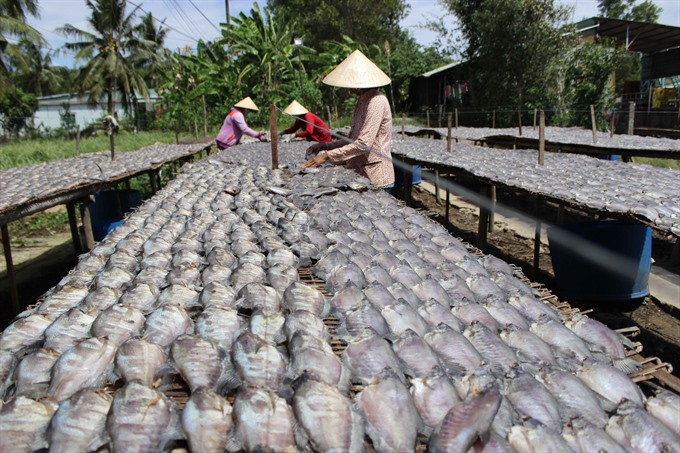 Mekong Delta dried fish making villages busy with Tết production