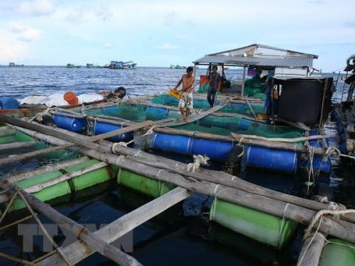 Aquaculture grows towards an industrial scale