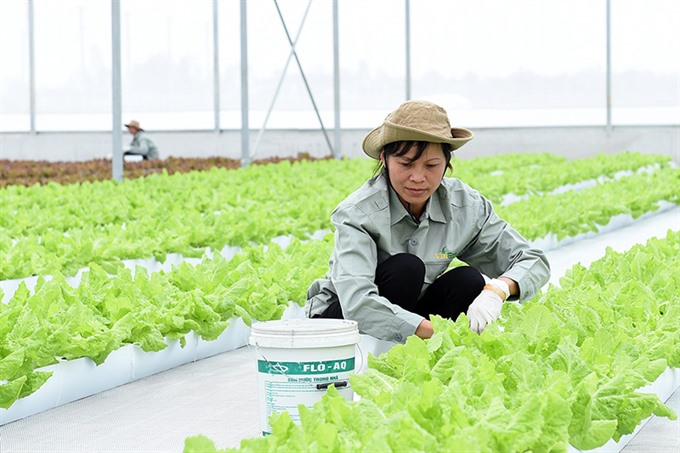 Japanese firms eye investing in Hà Nam