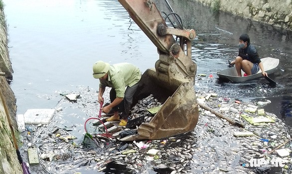 Polluted water kills fish at Vinh Citadel