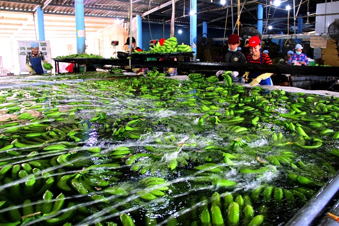 Data could help Việt Nam take the agriculture lead in a digital economy
