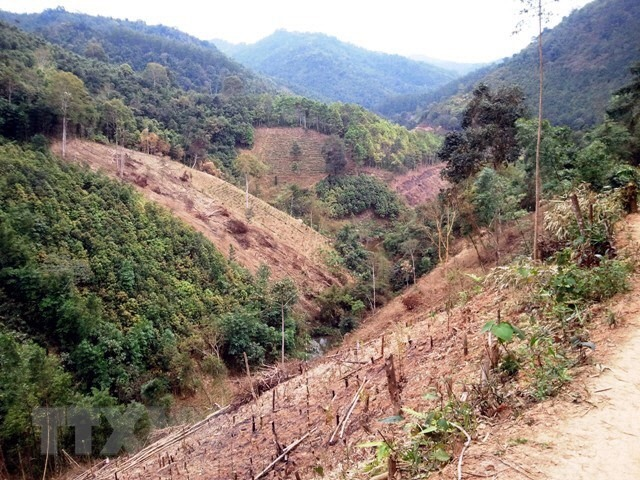 Gia Lai inspects forest management violation