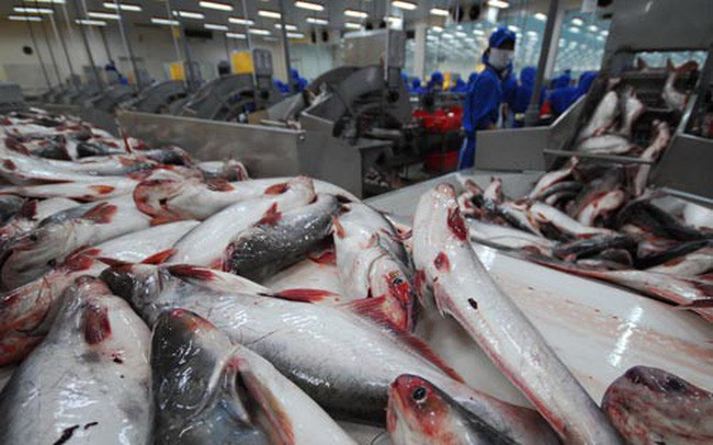 VN could face tra fish oversupply