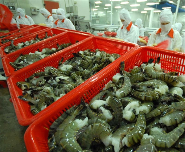 Việt Nams shrimp exports to China recover