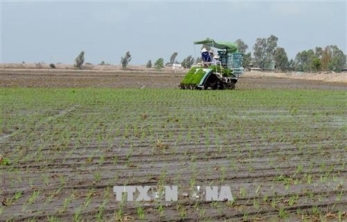 Dept proposes reducing rice farming areas for upcoming crop