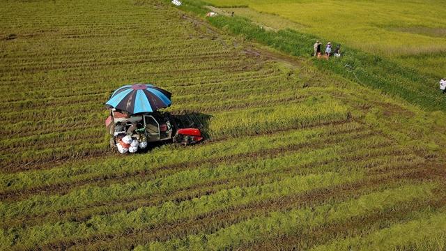 Land policies restrain Việt Nam agricultural development