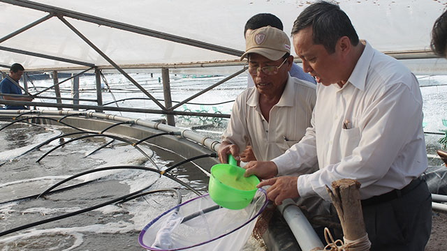 Shrimp breeders expand production seek to join global supply chains