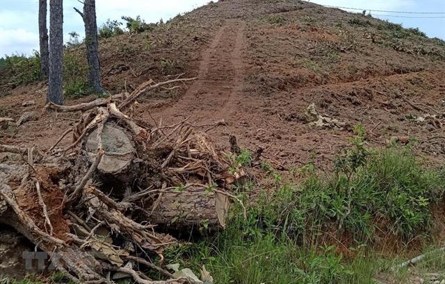 Lâm Đồng investigates forest destruction