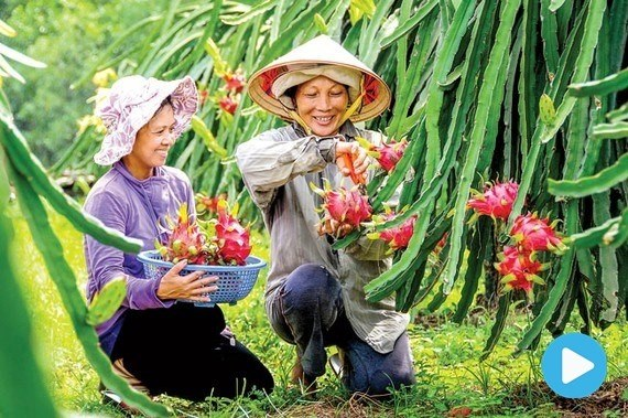 Fruit and vegtable export figures slip
