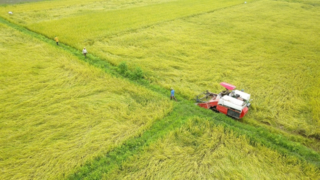 Land accumulation essential to apply innovation in agriculture