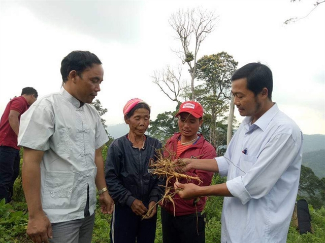 Medicinal plants help ethnic minority people escape from poverty