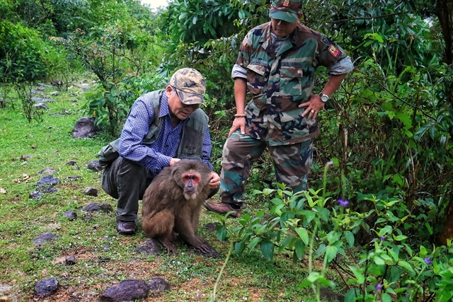 Captive monkey released into the wild