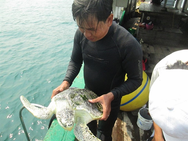 Côn Đảo Park listed in IOSEA turtle conservation network