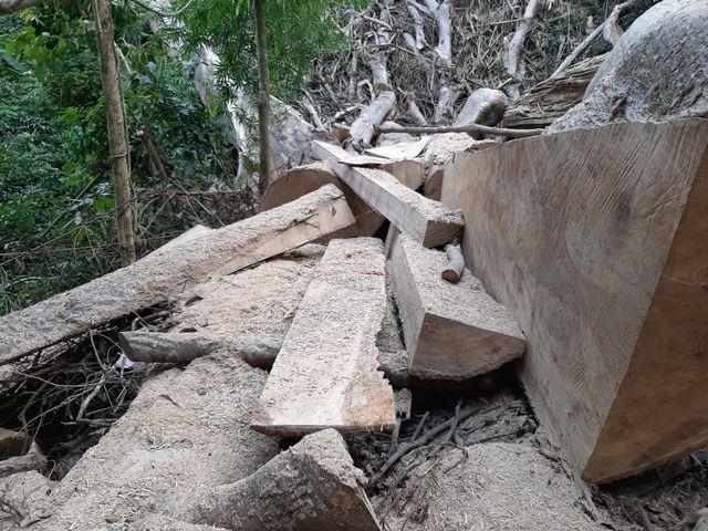 Đắk Lắk investigates forest destruction