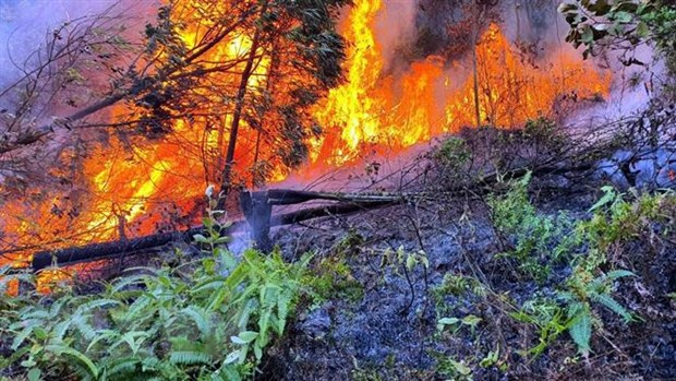 Forest fire in Vĩnh Phúc extinguished
