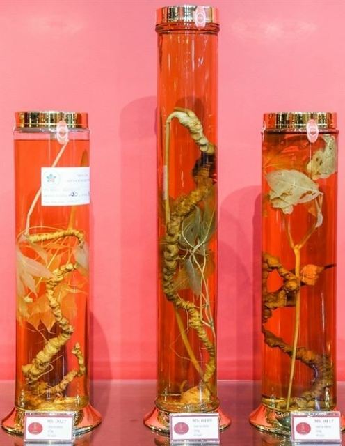 Ngọc Linh Ginseng Museum opens in HCM City