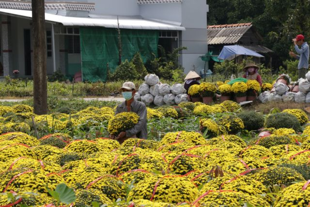 Mekong Deltas main flower ornamental plant growing district affected by saltwater in rivers