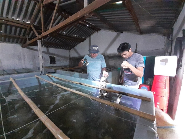 Farmers use environmentally friendly substrates to farm Pacific oysters