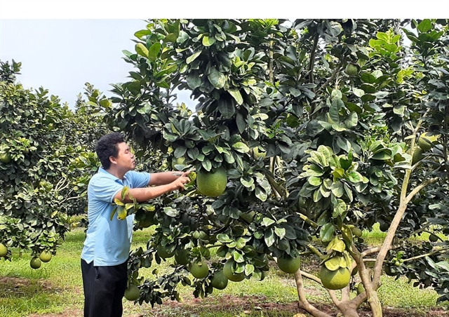 South takes steps to improve fruit yield reduce post-harvest losses