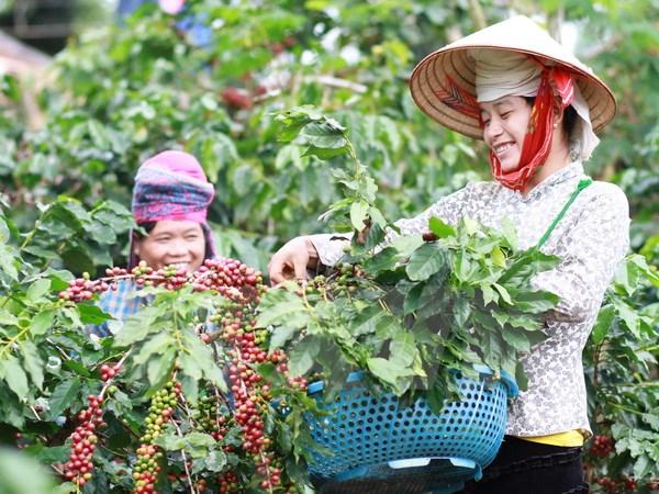 Đắk Lắk introduces economic potential to Australian investors
