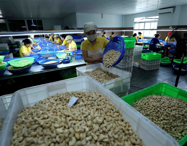 Việt Nam strives for 4 billion in cashew exports next year