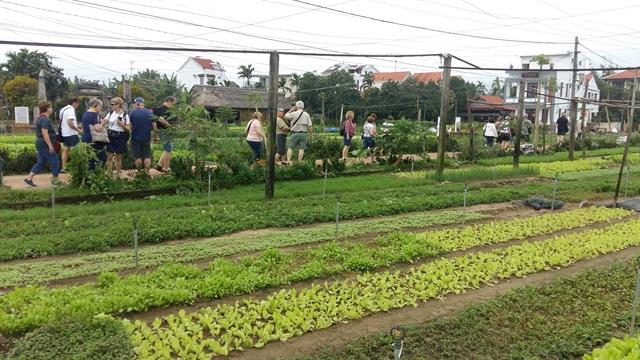 Trà Quế village to become new tour destination