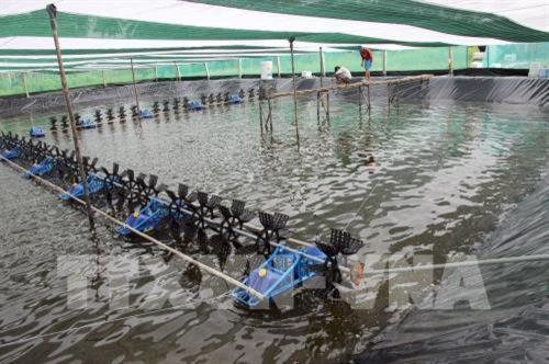 Cà Mau to increase aquaculture output