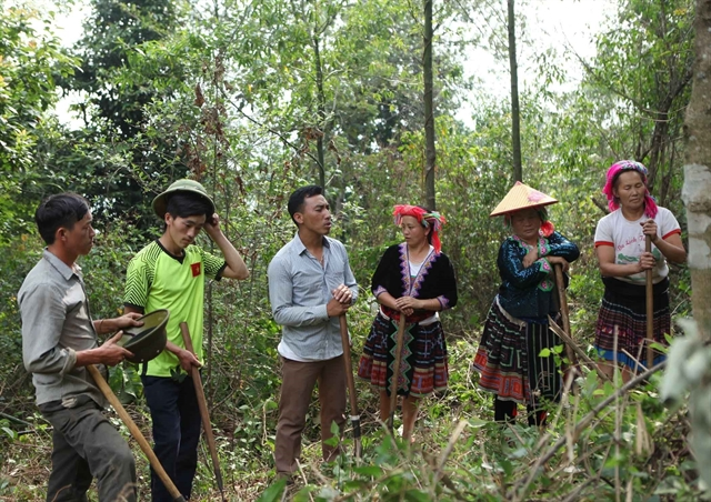 Forest management sector to improve forest protection