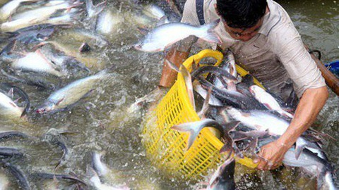 Việt Nam to fall short of fisheries export target