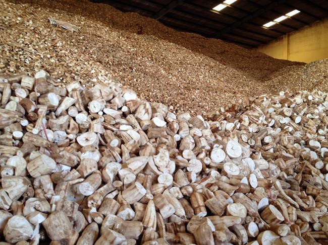 VN to face difficulties in cassava exports