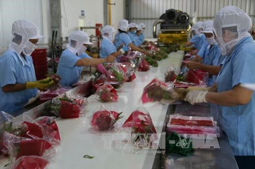 Tết ends early for fruit vegetable exporters