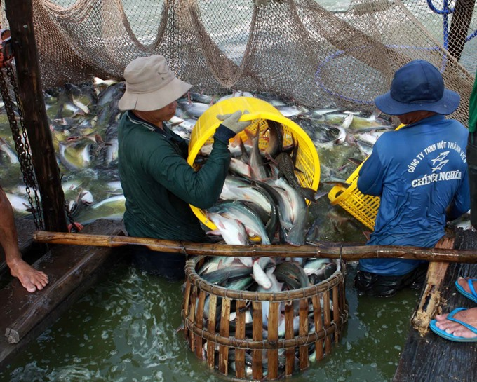 Việt Nam to see 2.4b in tra fish exports this year
