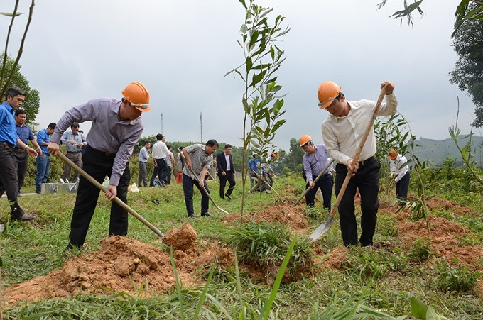 13500 trees planted along highways