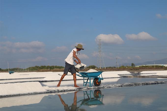 Bà Rịa-Vũng Tàu salt farmers rejoice as sun beats down