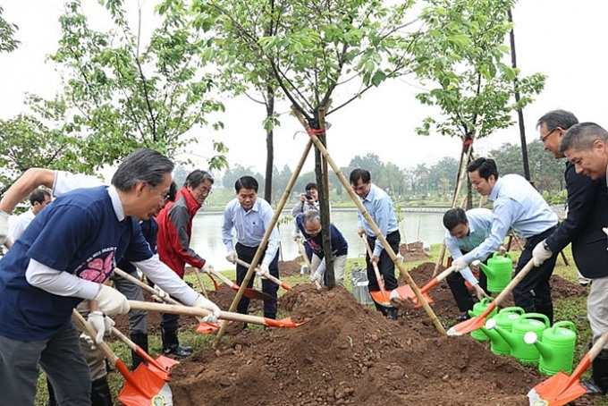 Additional 1000 cherry blossom trees planted in Hà Nội park