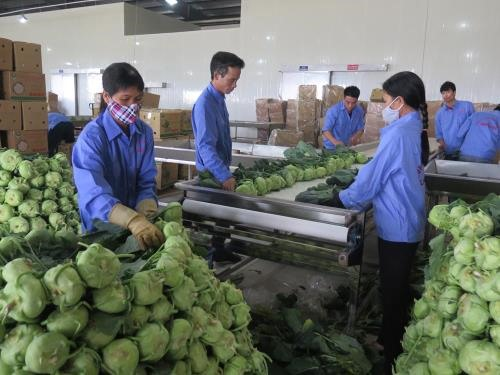 VN shows great potential for processed vegetable fruit exports