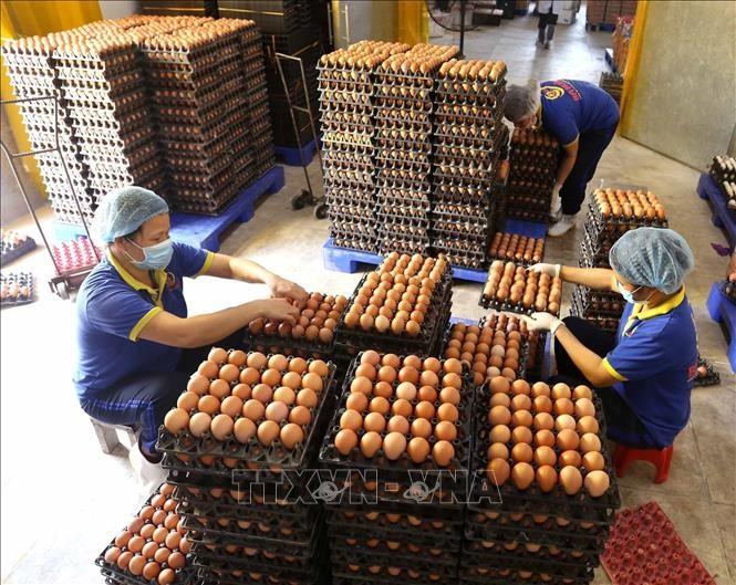 Quotas set for salt eggs