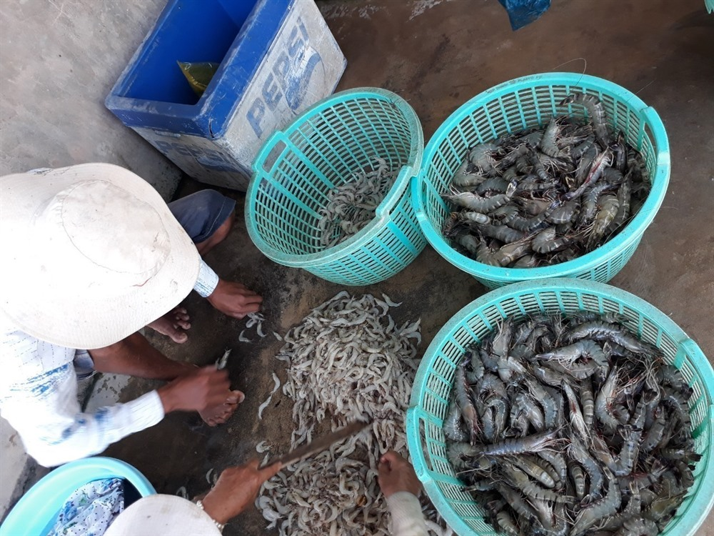 Việt Nam targets 4.2b in shrimp export value this year