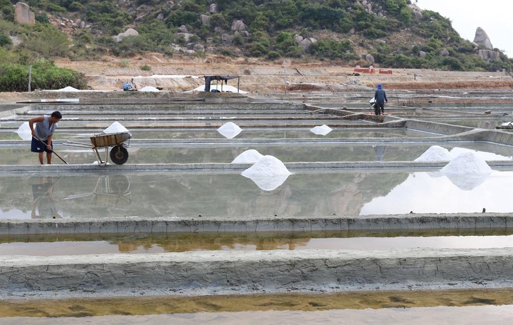 Ninh Thuận salt farmers make hay while the sun shines