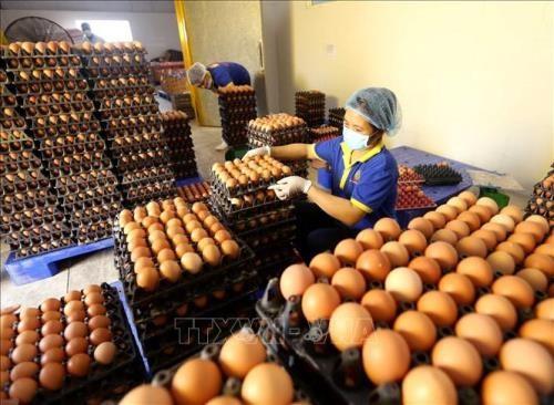 Vietnamese Japanese firms seal egg deal