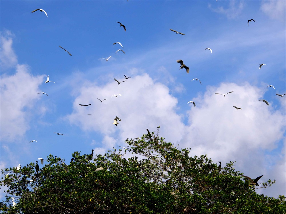 Bird garden in Cà Mau attracts 30000 tourists a year