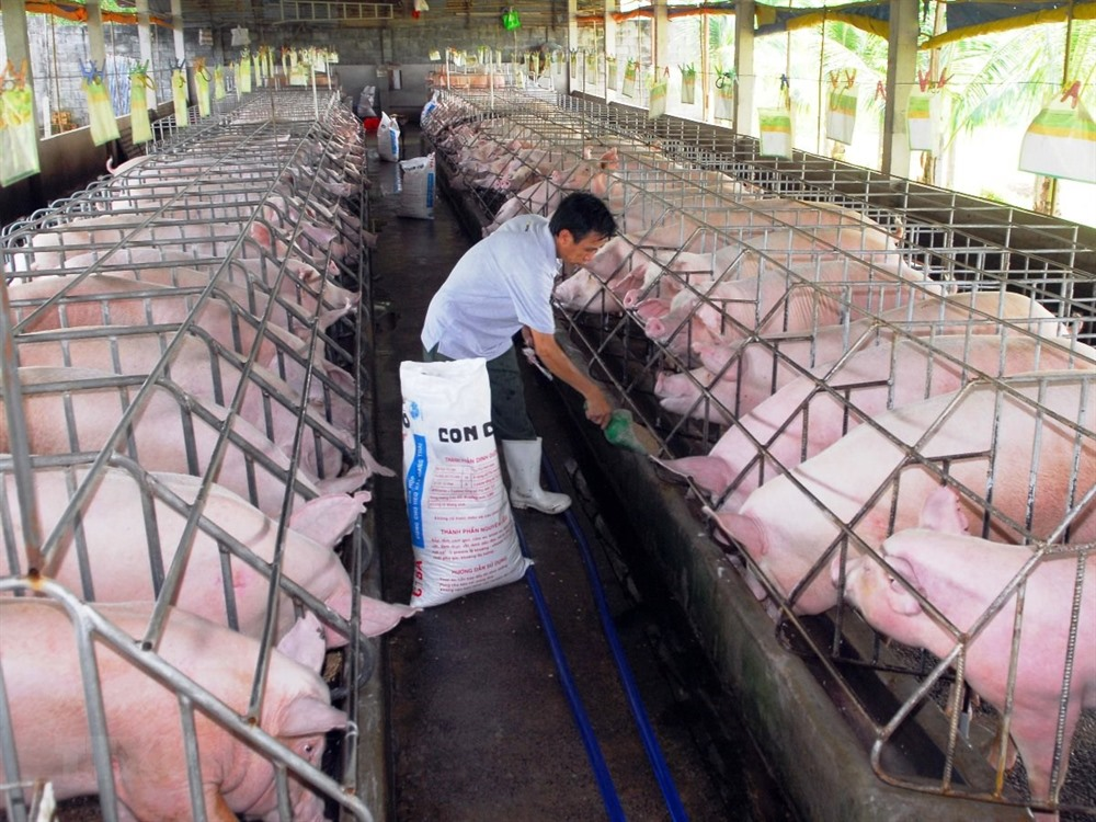 Credit institutions asked to aid disease-hit pig farmers
