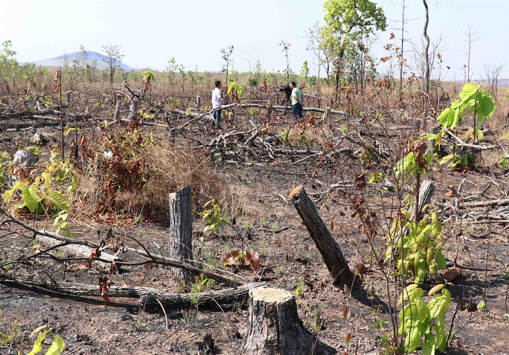 Forest illegally cut down along National Road 29 ahead of construction