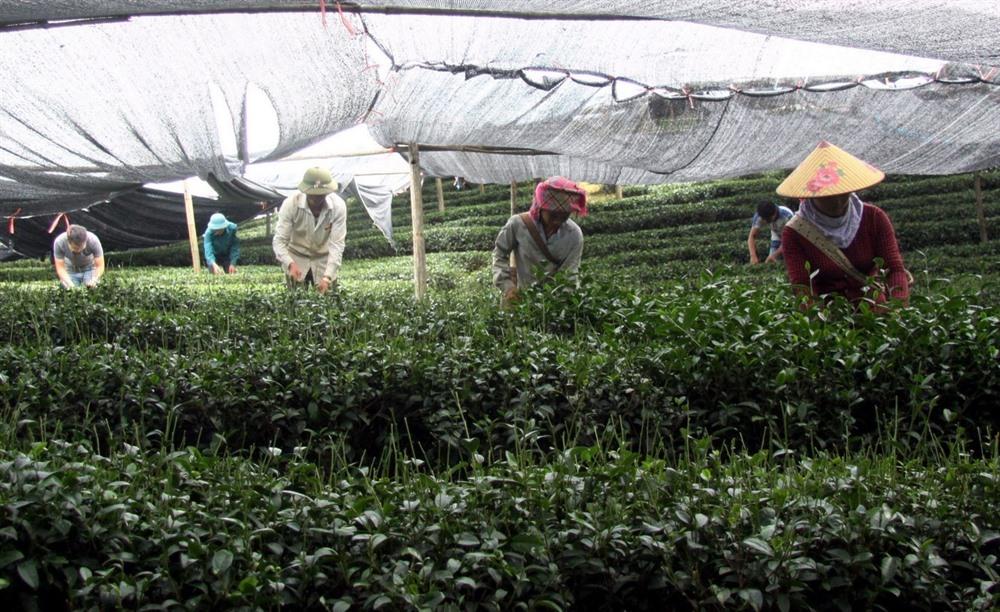 Việt Nams economic growth impressive in Q1