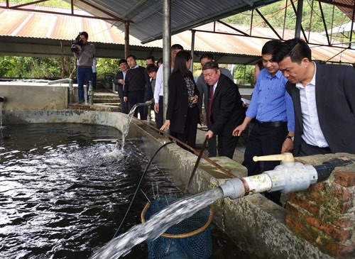 Lào Cai to set up agricultural speciality areas