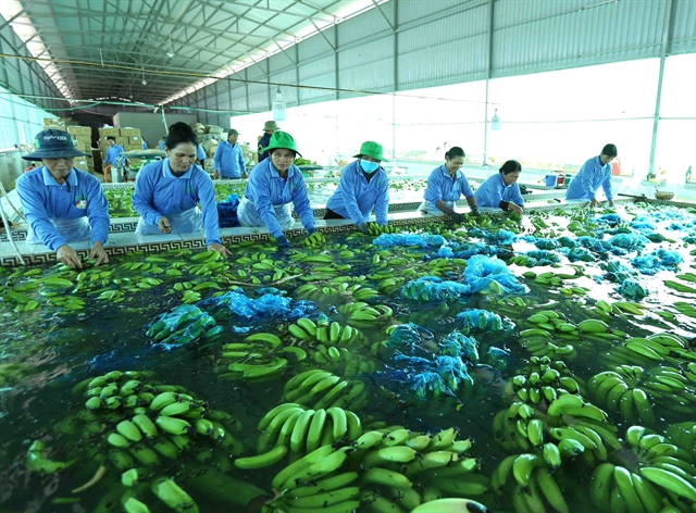 HCM City focus on applying hi-tech in to key agriculture products