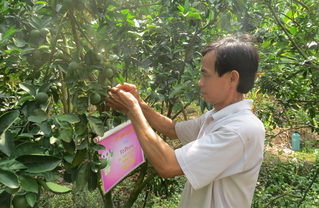 Đồng Tháp surges ahead with GAP quality for fruits innovative selling methods