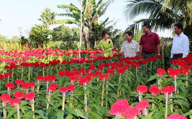 Mekong Delta farming co-operatives growing larger efficient: deputy PM